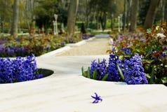 Camas de mármol en el parque adornado por los jacintos con una flor separada de un jacinto Fotos de archivo