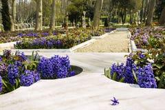 Camas de mármol en el parque adornado por los jacintos con una flor separada de un jacinto Fotos de archivo libres de regalías