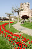Camas de tulipán en el parque fotografía de archivo libre de regalías