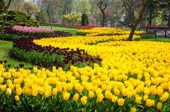 Camas de tulipán en el parque fotos de archivo