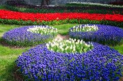 Camas de tulipán en el parque foto de archivo