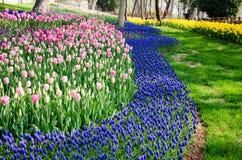 Camas de tulipán en el parque imágenes de archivo libres de regalías
