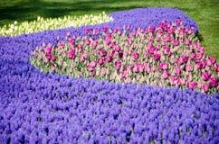 Camas de tulipán en el parque imagen de archivo