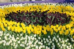 Camas de tulipán en el parque imagen de archivo libre de regalías