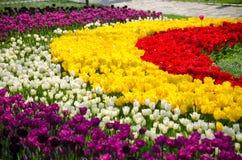 Camas de tulipán en el parque imagenes de archivo