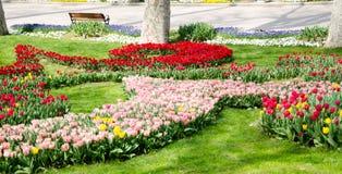 Camas de tulipán en el parque fotografía de archivo