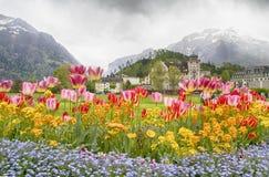 Camas de tulipa e ajardinar bonito na frente dos cumes suíços, Imagens de Stock