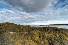 Camas del quelpo en la costa atlántica durante la bajamar fotografía de archivo libre de regalías