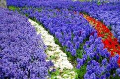 Camas del tulipán y del jacinto en el parque fotos de archivo libres de regalías
