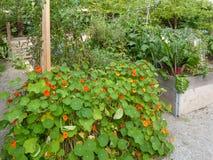 Camas levantadas del jardín Foto de archivo libre de regalías