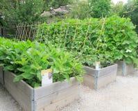 Camas levantadas do jardim Imagens de Stock