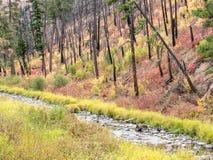 Camas liten vik, östliga Oregon Arkivbild