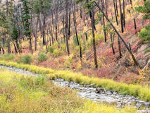 Camas-Nebenfluss, Ost-Oregon Stockfotografie