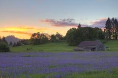 Camas, solnedgång och gammal ladugård Royaltyfri Foto