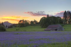 Camas, Sunset, and Old Barn Royalty Free Stock Photo