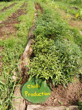 Camas vegetais, exploração agrícola orgânica Imagem de Stock