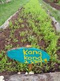 Camas vegetais, exploração agrícola orgânica Foto de Stock Royalty Free