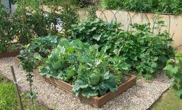 Camas vegetales con las coles, pepinos, tomates en un huerto equipado según el principio de agricultura biológica imagenes de archivo