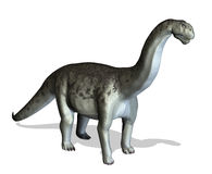 Camasaurus Stock Photo