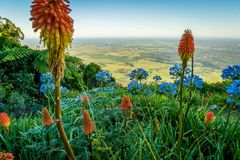 Cambewarra lookout in the summer with orange and blue flowers in the foreground Stock Photography