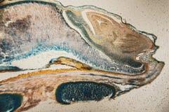 Cambial микроскоп замечания клеток Стоковые Фотографии RF