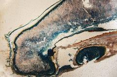 Cambial микроскоп замечания клеток Стоковые Изображения