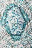 Cambial микроскоп замечания клеток Стоковая Фотография