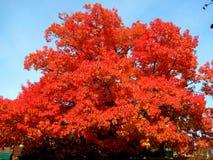 Cambiamenti di colore di autunno Immagine Stock Libera da Diritti