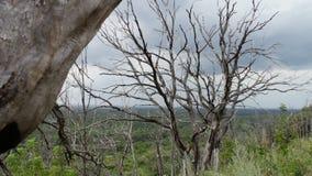 cambiamento del clima La foresta muore da mancanza di acqua Riscaldamento globale Gli alberi appassiscono Minaccia contro umanità video d archivio