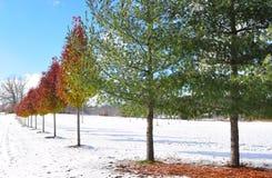 Cambiamento delle foglie con le stagioni cambianti Immagine Stock