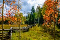 Cambiamento delle stagioni Fotografia Stock Libera da Diritti