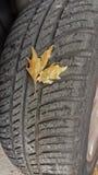 Cambiamento di autunno delle gomme Fotografie Stock Libere da Diritti