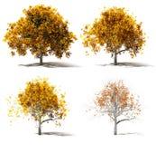 Cambiamento di quattro Autumn Marple Trees Color Fotografie Stock Libere da Diritti