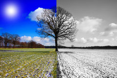 Cambiamento di stagione Fotografie Stock