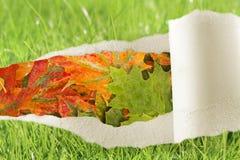 cambiamento di stagioni di autunno Fotografia Stock Libera da Diritti