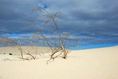 Cambie el clima. Calentamiento del planeta Imagen de archivo