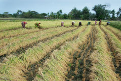 Cambio de clima en agricultura Imágenes de archivo libres de regalías