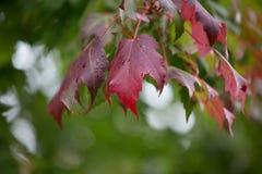 Cambio de las hojas Imágenes de archivo libres de regalías