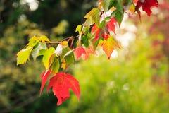 Cambio de las hojas Imagen de archivo libre de regalías