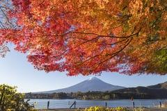 Cambio de las hojas de arce al color del otoño en el Mt Fuji, Japón Imagen de archivo libre de regalías