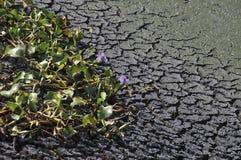 Cambio del clima - suelo seco y plantas de muerte fotos de archivo