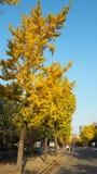 Cambio del color de las hojas en Japón Imágenes de archivo libres de regalías