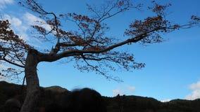Cambio del color de las hojas en Japón Foto de archivo libre de regalías