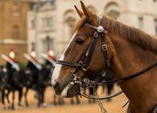 Cambio del guardia de vida del ` s de la reina, Londres, Reino Unido Fotografía de archivo libre de regalías