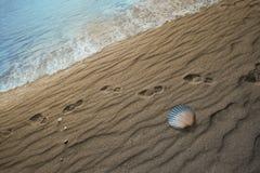 Cambio gradual del color en concha marina Imagen de archivo libre de regalías