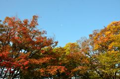 Cambio Japón del color del otoño Fotos de archivo