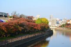 Cambio Japón del color rojo del otoño Fotos de archivo