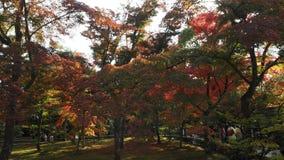 Cambio Kyoto Japón del color de las hojas Foto de archivo