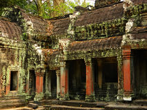 cambodia övergiven tempel TA Prohm Royaltyfri Bild