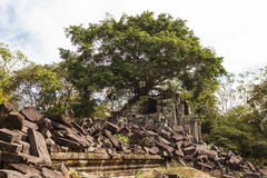 Cambodia. Big trees on the ancient temple Ta Phrom Aspara, Angkor Wat, Cambodia Stock Photo